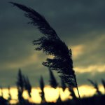 grass - ostatni