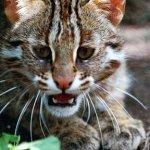 Kočka divoká - zvirata